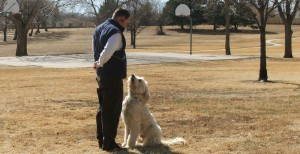 Dog Training Montgomery